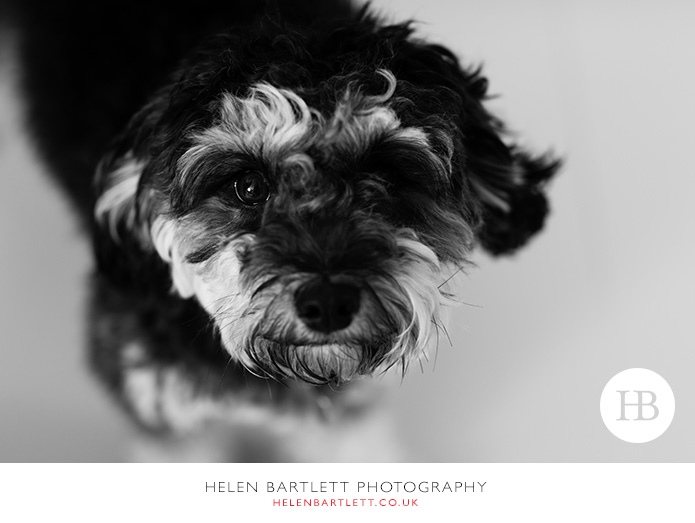 blogImagefamily-photography-sevenoaks-kent-32