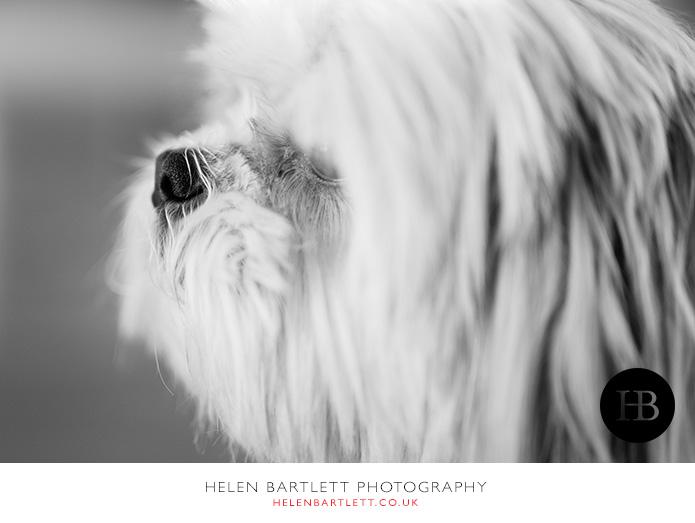 blogImagebaby-photography-wimbledon-12