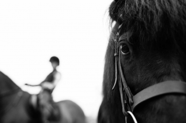 A horse looks directly at the camera while a teenager rides a horse in the background.