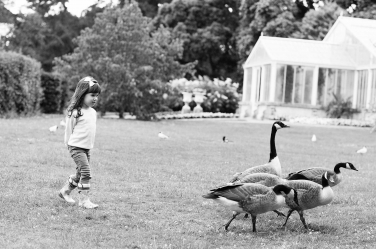 A girl stalks geese during a fun family portrait shoot.