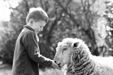 A small boy feeds a sheep in this black and white photo by professional photographer Helen Bartlett.