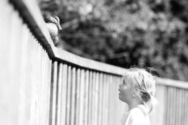 A tiny girl eyes up a fence-sitting duck.