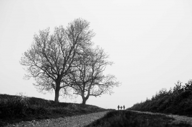 A tree and hill provide a dramatic silhouette framing for Hampstead family portraits.