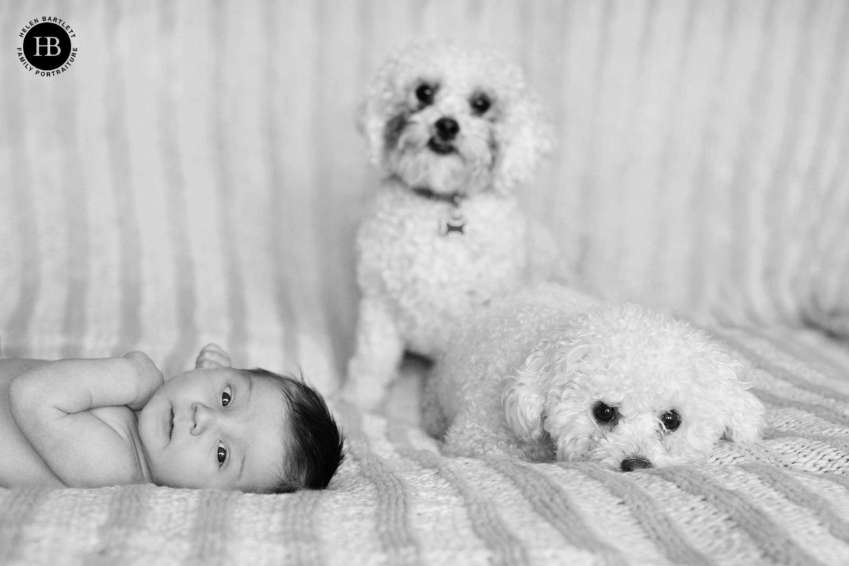 Family dogs join in their home newborn shoot. Clear surfaces and neutral bedding can be helpful for timeless newborn photos in black and white.
