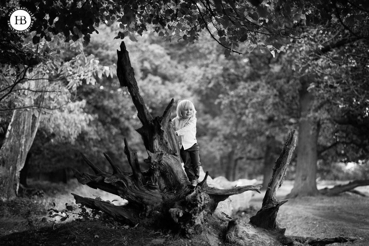 boy climbs on a tree in beautiful black and white environmental portrait photograph in Richmond Park