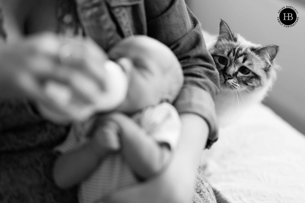 cat-looks-at-newborn-baby-fun-include-family-pets-in-newborn-portrait-sessions